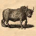 buffalo thumbnail