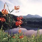 Morton image thumbnail
