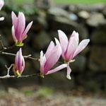 Coker Arboretum thumbnail