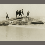 Black and white photograph of people standing on a whale