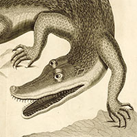 illustration of a crocodile