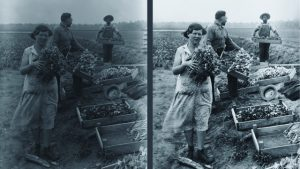 Wootten photo before and after clean-up. Photo of people gathering tulips.