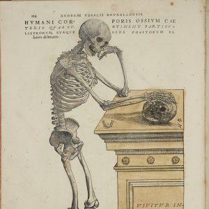 De humani corporis fabrica libri septem by Andreas Vesalius
