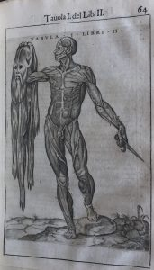 A copperplate showing the exposed musculature of a skinned anatomy specimen. The figure holds a knife in his left hand and his own skin in his right.