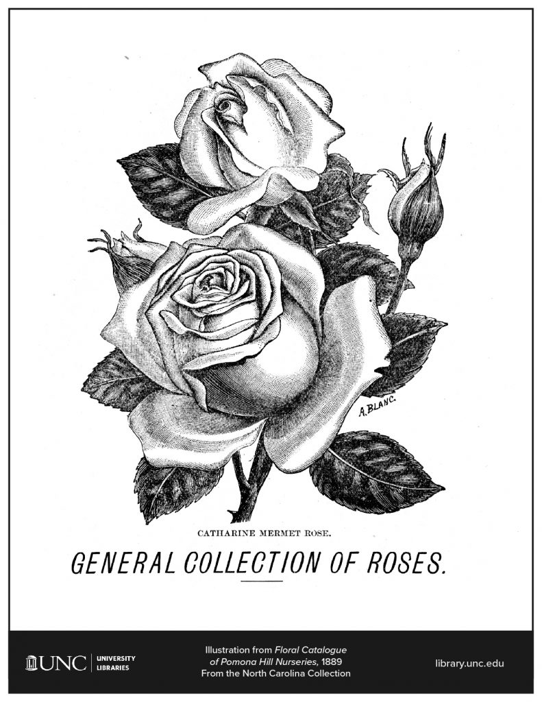 Coloring page of an illustration of a rose