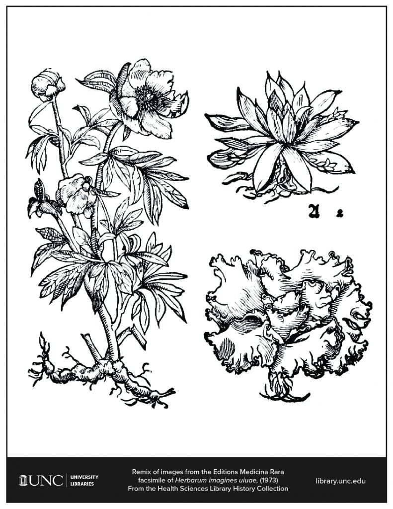 Coloring page of images from Editions of Medicina Rara facsimile