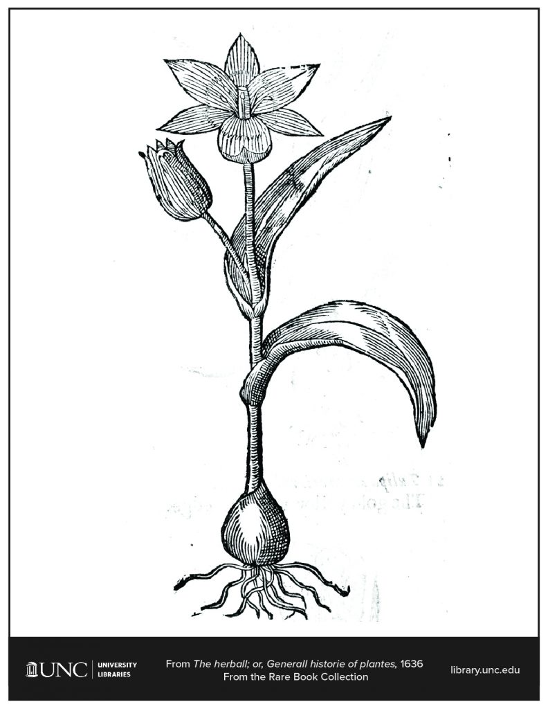 Coloring page of herbal flower