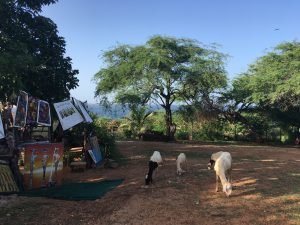 goats and art on gorée island