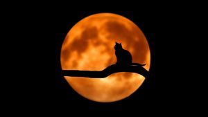 silhouette: cat on branch in front of orange full moon